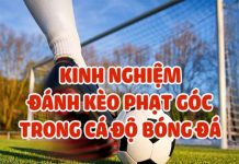 keo-phat-goc-va-keo-rung-la-gi-dieu-can-biet-ve-loai-keo-nay