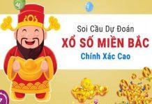 soi-cau-247-me-trang-tong-hop-thong-tin-dien-dan-soi-cau-chinh-xac-1